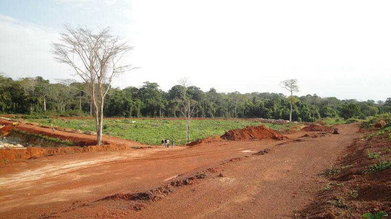 Rekultivierung & Wiederaufforstung in Westafrika